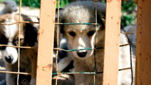 Florida Disagrees to Puppy Mills